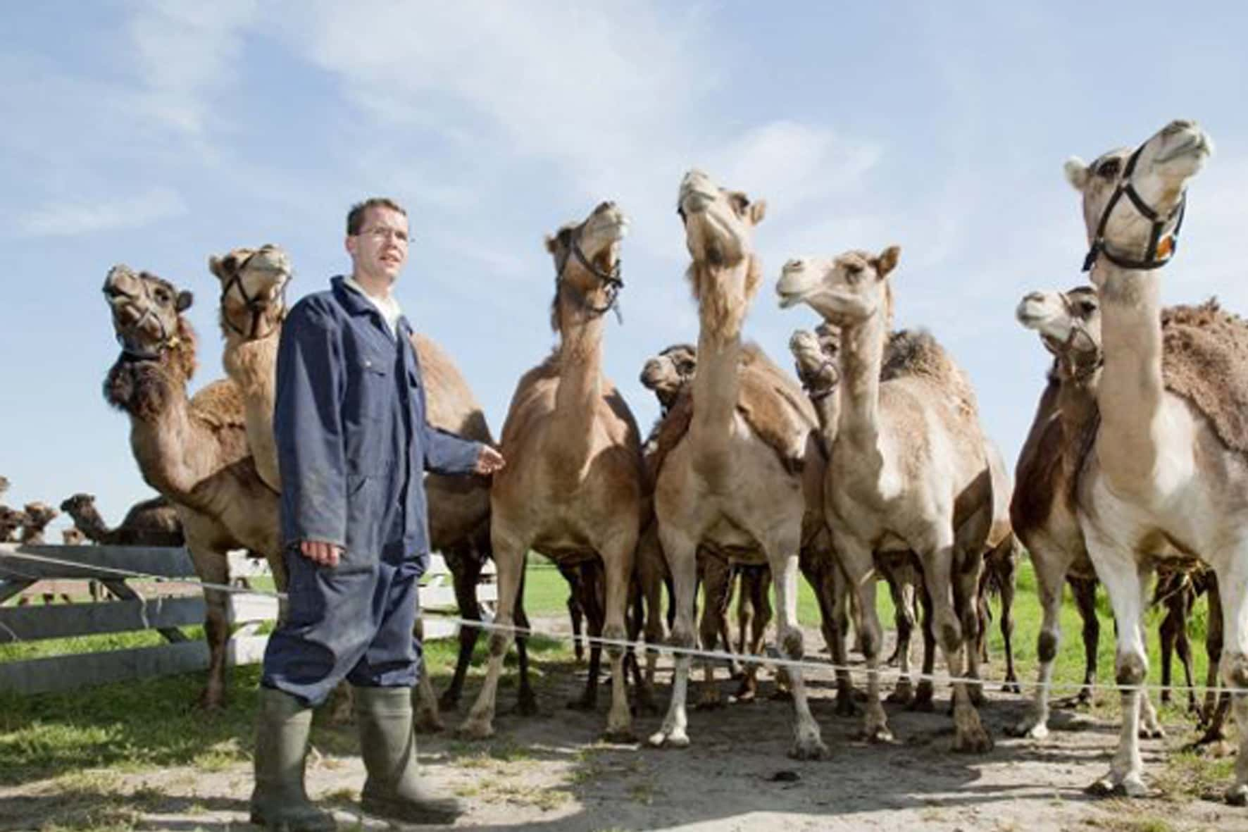 Kamelenmelkerij Smits