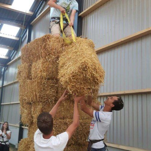 hooibaal stapelen bij de kamelenmelkerij